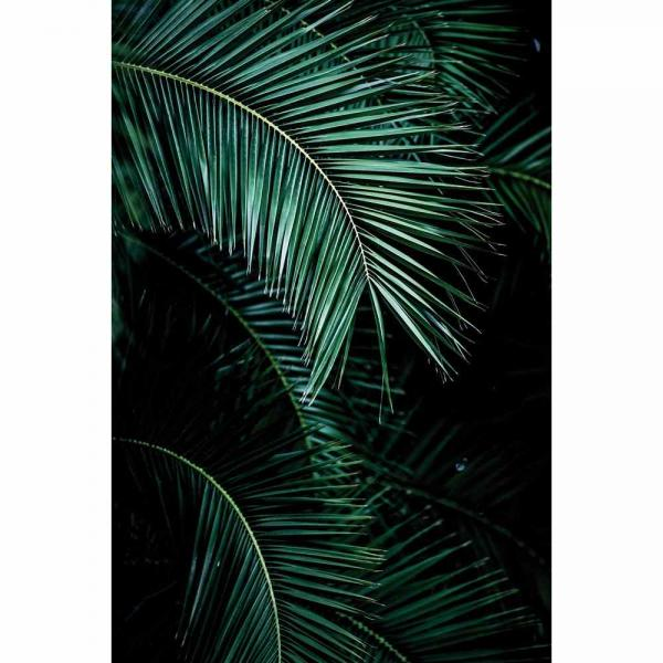 Rasch Young Artist Collection Vlies Fototapete 100990 grün schwarz
